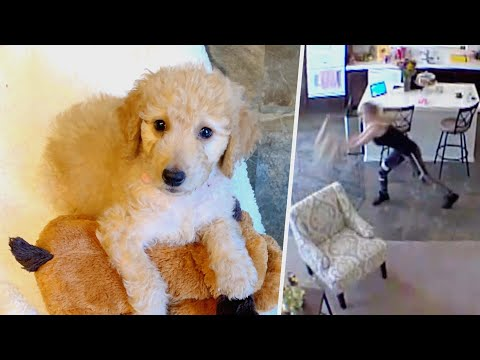 Kristina - WATCH: Pet Sitter Throws 10-Week-Old Puppy