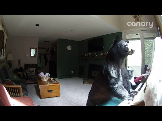 "Bear Breaks Into Colorado Home, ""Plays"" Piano"