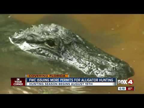 Florida Wildlife Issuing More Permits For Alligator Hunting