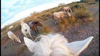 Dans la peau d'un cheval de Camargue - ZAPPING SAUVAGE