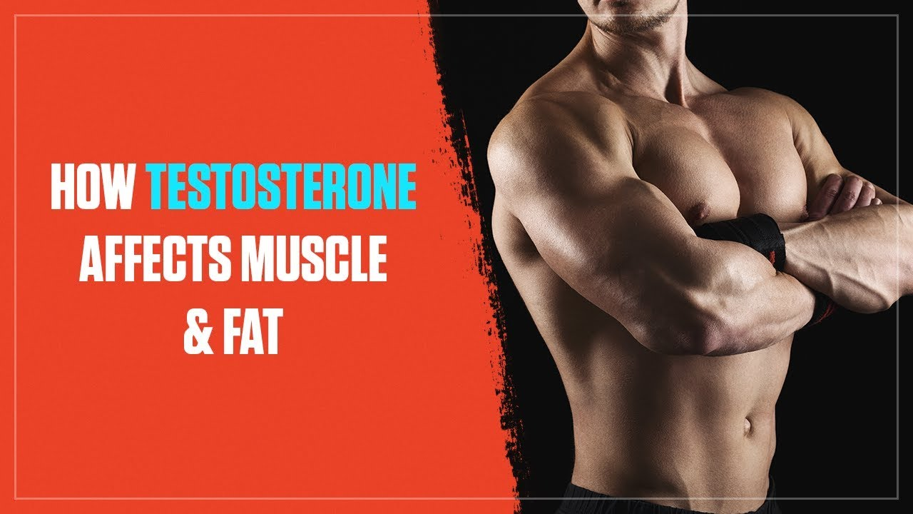 How Testosterone Levels Affect Muscle Growth and Fat Loss - Legion ...
