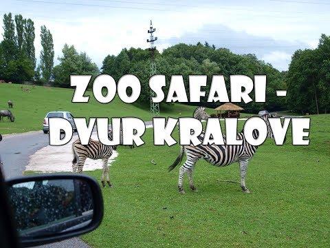 WARTO ZOBACZYĆ: ZOO Safari - Dvur Kralove