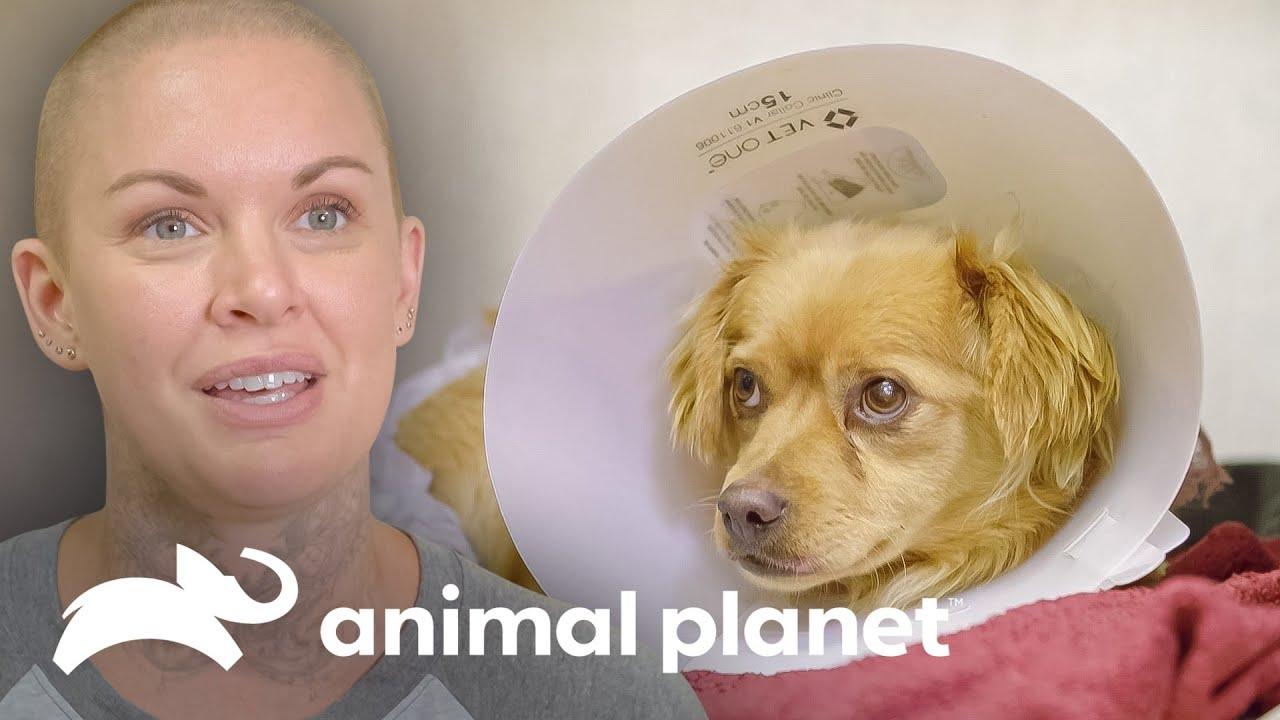 Amanda va a California por cachorros con necesidades especiales | Amanda al Rescate | Animal Planet