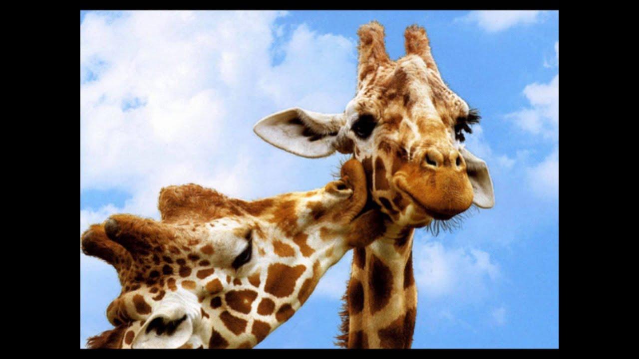 Girafe Ecureil  jeu girafe ecureil catégorie images  Drole.ch