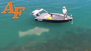 Catching 24 Fish and a Monster Grouper aka Queensland Groper w Jump Cut Edit  EP.366