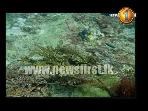 News1st: Kalpitiya swarming with illegal activity; marine-life, birds at risk