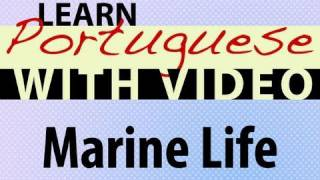 Learn Brazilian Portuguese with Video - Marine Life