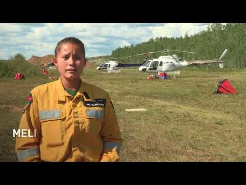 NAIT Forest Technology: Career Options