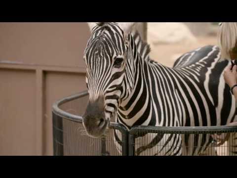 Zari the Zebra thumbnail