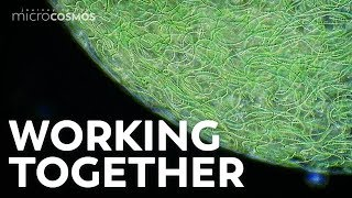 how-do-colonies-help-microorganisms-survive