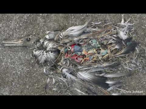 Coca-Cola - Stop choking our oceans