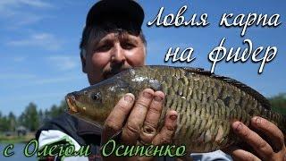 Ловля карпа на фидер с Олегом Осипенко видео : ОДР #2(Ловля карпа на фидер - увлекательнейшее занятие, ведь это крупная рыба, а какой рыболов не мечтает поймать..., 2015-06-22T09:48:50.000Z)