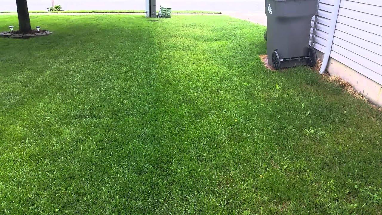 Salt On My Lawn Pt 2