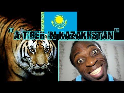 "Living And Working In Kazakhstan  | ""A Tiger In Kazakhstan"" | Vlog"