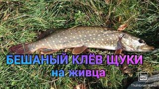 Бешаный клёв щуки Рыбалка в ростовская обл