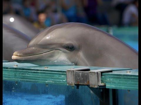 Животное дельфин: интересные факты с фото и видео