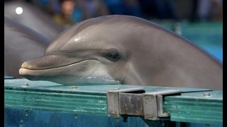 Любить Дельфинов До Смерти, Правда о Дельфинариях