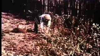 Operating a co-operative farm in East Germany, 1960's -- Film 3412