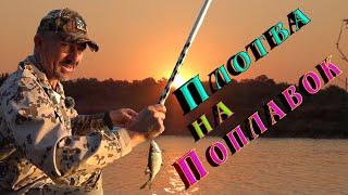 Как поймать плотву летом на удочку Отдохни от карантина и лови рыбу со мной