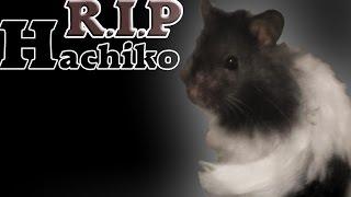 Abschied von Hachiko