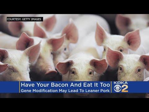 'CRISPR' Bacon? Scientists Create Low-Fat Pigs