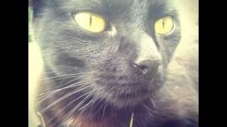 El gato vive solo. No necesita sociedad alguna. Sólo obedece cuando quiere, o simula dormir para o