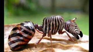 Hybrid-Animals