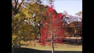 Athens, Texas in the Autumn of 2012