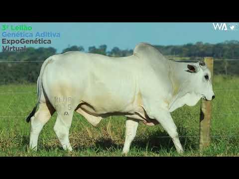 LOTE 1001 - REM HIT GEN. ADITIVA - REMP 935 - 3º Leilão Genética Aditiva Expogenética 2020