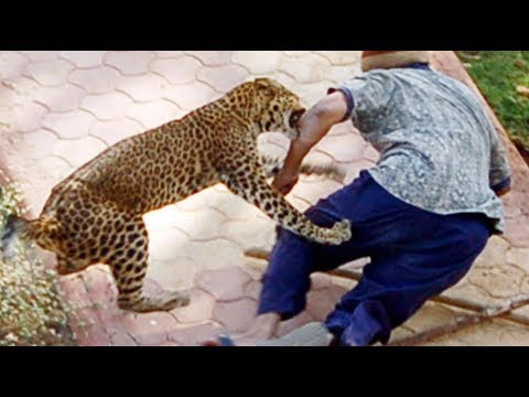 When Zoo Animals Attack Compilation Part 4