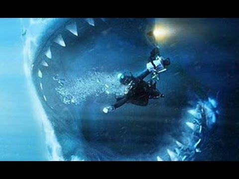 worlds biggest shark megalodon