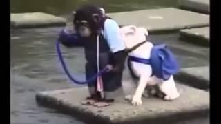 Крепкая дружба между обезьяной и собакой!