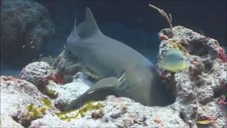 Shark Attacks Surfer!  Real or Fake?