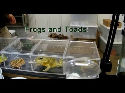 Frogs and Toads: Tomato, Poison Dart, African Giant Pixie, Blue Dumpy, & More!