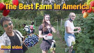 The Best Farm  N America  Ndian Vlogger Hindi Vlog