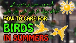 Download Mp3 How To Care For A Bird In Summer | Bird Care | Video In Urdu/hindi