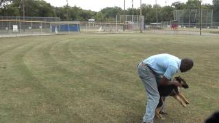 Guy Nashville Dog Trainer  052 Training A German Shepherd Puppy Advanced Obedience