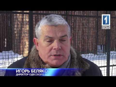 Как зимуют питомцы одесского зоопарка