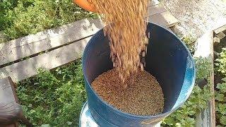 Измельчаем  зерно и ячмень для цыплят.
