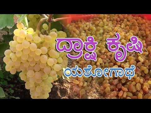 Grape cultivation : a success story in Kannada