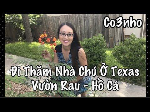 Vườn Rau Sau Nhà Ở Mỹ Texas - Cuộc Sống Ở Mỹ - Co3nho 281
