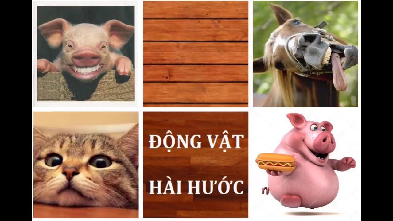 [Khoảnh Khắc Hài Hước] Những âm thanh hài hước và bắt chước tiếng người  được tạo ra từ động vật