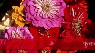 Phool Ko Aankha ma by Ani Choing Nepali Song