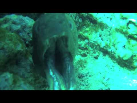 Moray Eel bites camera