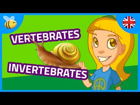 Vertebrates and Invertebrates Animals (part 1) | Kids Videos