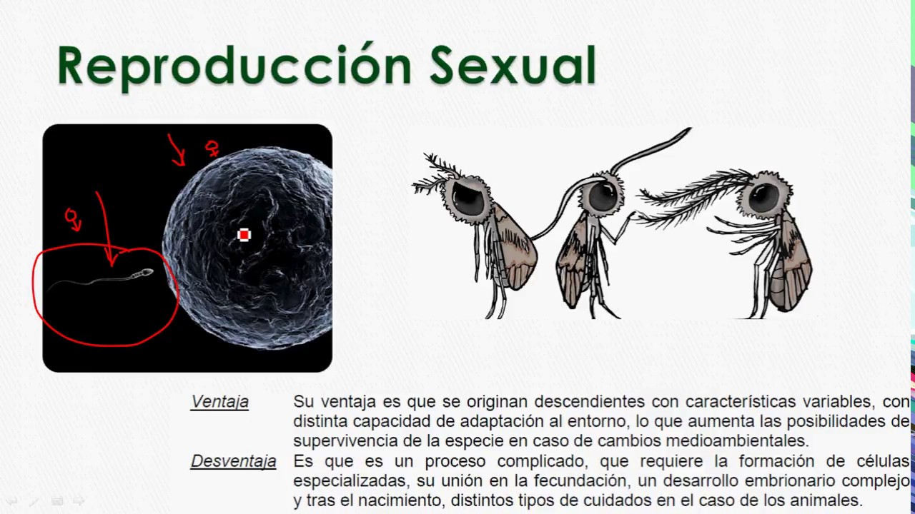 Fotos de reproduccion sexual y asexual