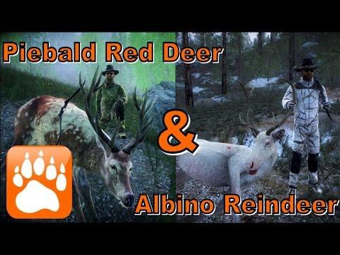 Albino Reindeer & Piebald Red Deer | theHunter Classic 2017