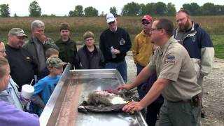 Canada Goose Processing From Field To Table | Indiana Dnr