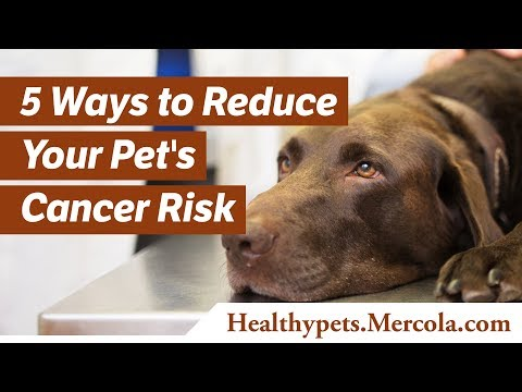 5-ways-to-reduce-your-pet's-cancer-risk