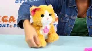Interactive Kitty Daisy / Interaktywny Kotek Daisy - FurReal Friends - Hasbro - Plays with Me